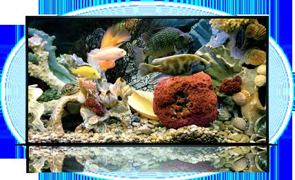 Аквариум - имитация моря