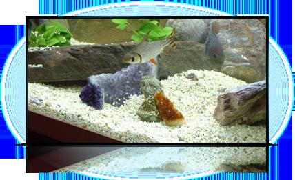 Аметисты в аквариуме...