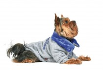 Фото 2 - Pet Fashion Толстовка Фред XS