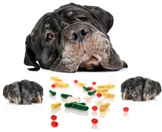 Лекарства и витамины для собак