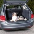 Trixie подстилка в багажник, 120 х 150 см