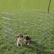 Trixie Вольер для собак