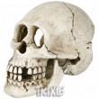 Trixie Череп, 15 см 8713