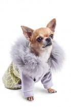 Фото 1 - Pet Fashion Толстовка Тиффани XXS