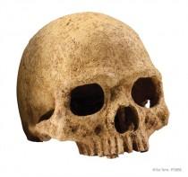 Фото 1 - Exo Terra Декорация череп человека